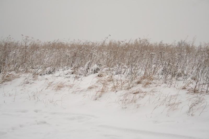 Winter-Haiku (Fuyu)
