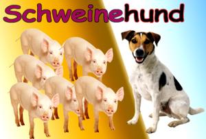 Der Schweinehund aus subjektiver Sicht