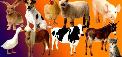 Welche Tiere kann man essen?