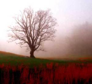 Baumheiltherapie - Warum Sie Weiden nicht meiden sollten