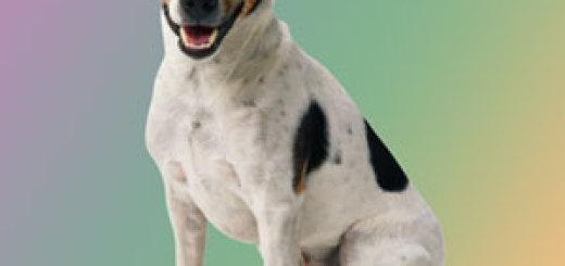 Kleiner Hund mit großem Ego