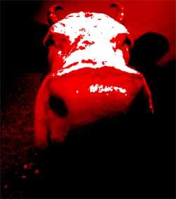 Stierkampf: Eine teuer subventionierte Tierquälerei