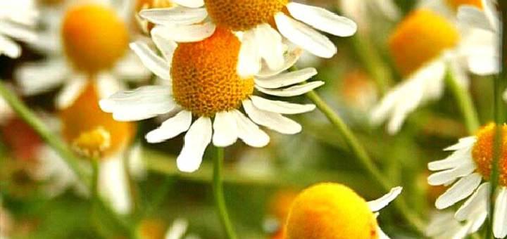 Durch die Blume gesagt