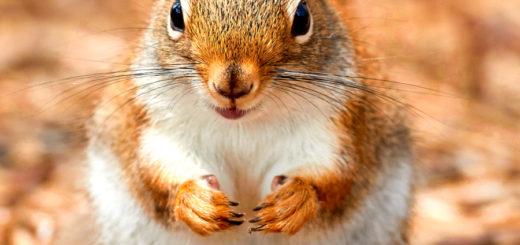 Das Eichhörnchen als emotionales Assistenztier