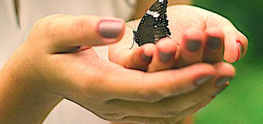 Schmetterlingprinzip